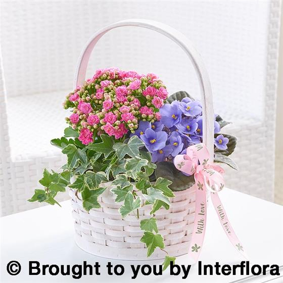 Pretty Mother's Day Planted Basket
